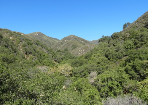 Cold Spring Canyon Trail hike Santa Barbara Montecito Los Padres national forest Santa Ynez Mountains