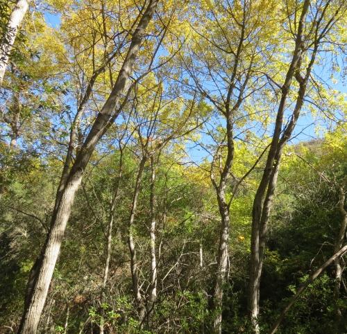 cottonwood tangerine falls hike trail santa barbara montecito Santa Ynez Mountains los padres nation forest