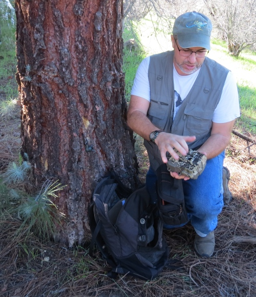 David Lee ventura wildlife guru camera trapping tracking