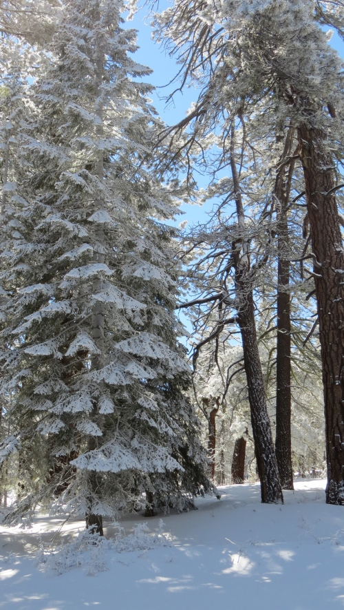 Mount Pinos winter snow shoeing