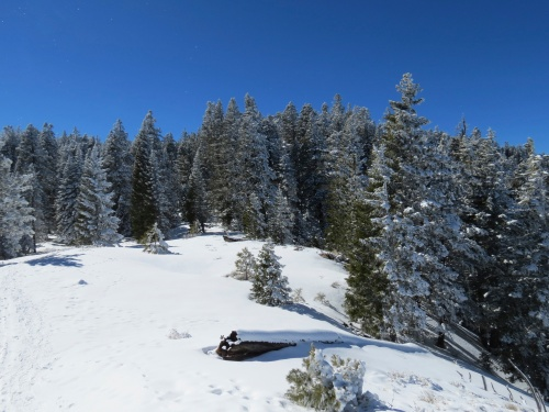 Mount Pinos snowshoe cross-country skiing Inspiration Point Trail Los Padres National Forest southern California