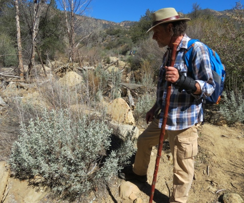 Lanny Kaufer Herb Walks Ojai great basin sagebrush potrero john trail canyon los padres national forest sespe wilderness