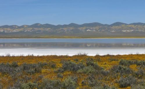 wildflowers soda lake temblor mountains Carrizo plain national monument