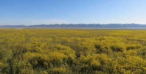 Carrizo Plain wildflowers temblor mountains soda lake goldfields