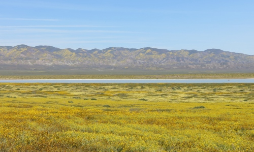 wildflowers carrizo plain temblor mountains soda lake