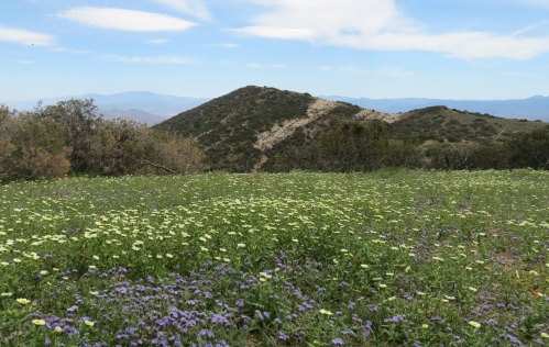 Caliente Mountain Range wildflowers super bloom Carrizo Plain trail hike