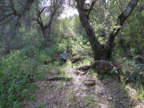 Little Pine Spring Camp hiking backpacking Santa Barbara Los Padres national forest