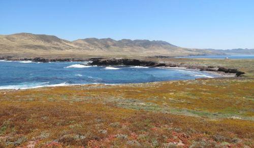 Wildflowers Fraser Point Western Santa Cruz Island Nature Conservancy Island Packers hike Channel Islands