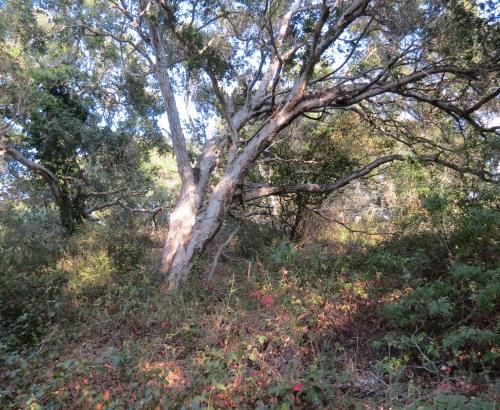 Elings park south hike trail Santa Barbara