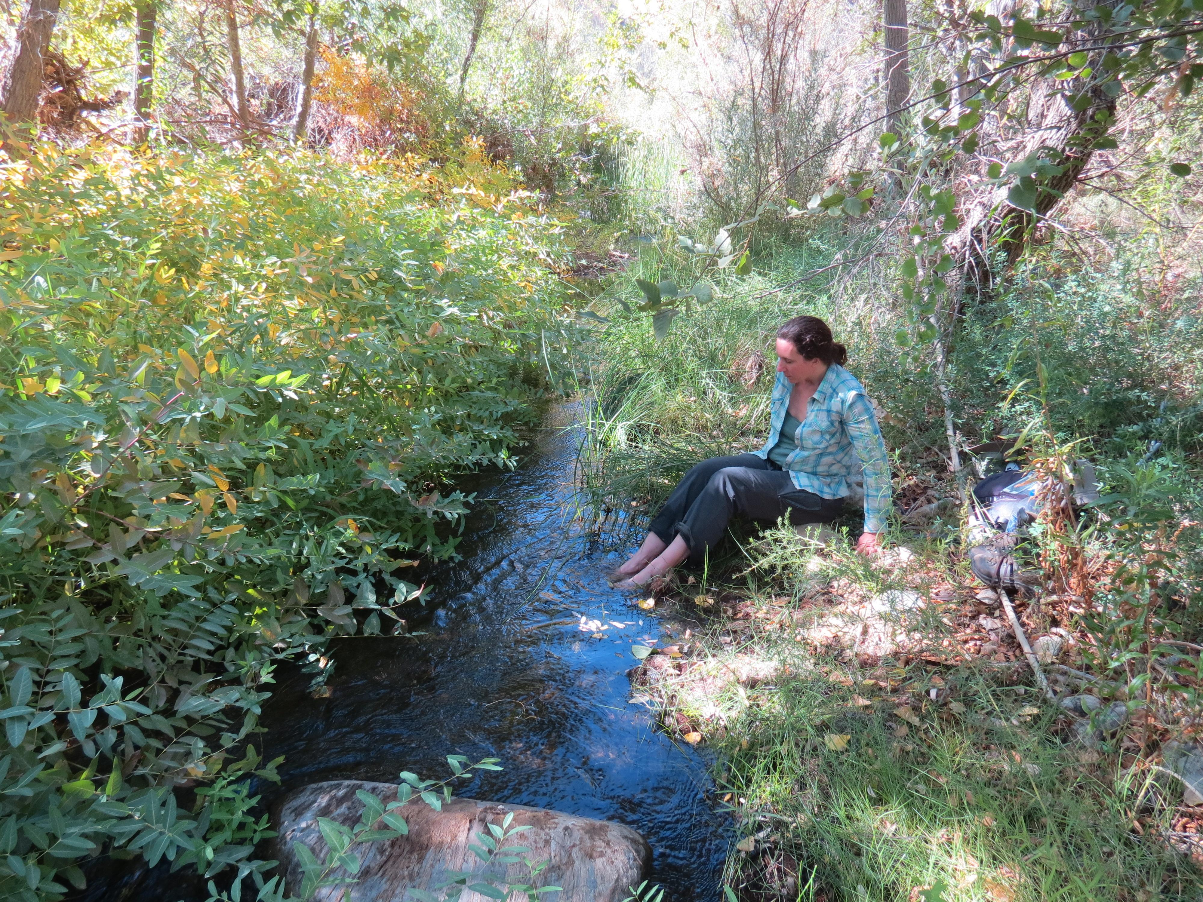 Dogbane Piru Creek hike Sespe Wilderness Los Padres National Forest