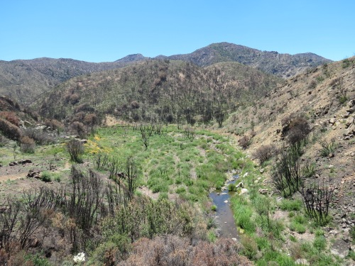 Lion Canyon Trail Thomas Fire Ojai hike Los Padres National Forest