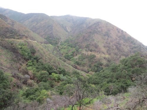 Old Romero Road Canyon Thomas Fire Burn area front country trails los padres national forest santa ynez mountains