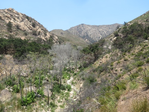 Buena Vista Canyon Trail Thomas Fire Santa Barbara Montecito hike Los Padres National Forest