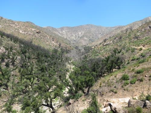 Hot Springs Canyon Trail Thomas Fire Santa Barbara Montecito hike Los Padres National Forest