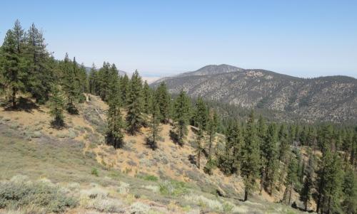 McGill Trail hike San Emigdio Mountains Tecuya Ridge Mount Pinos Los Padres National Foreest