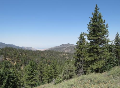 Jeffrey pines McGill Trail hike San Emigdio Mountains Tecuya Ridge Mount Pinos Los Padres National Foreest