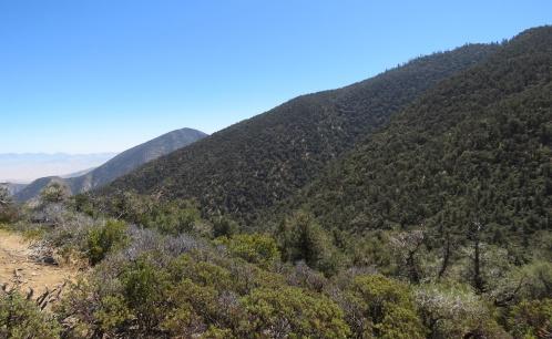 Eagle Rest Peak trail hike San Emigdio Mountains Los Padres National Forest