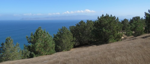 Torrey pines grove hike Santa Rosa Island Channel Island National Park rarest pine relic plant