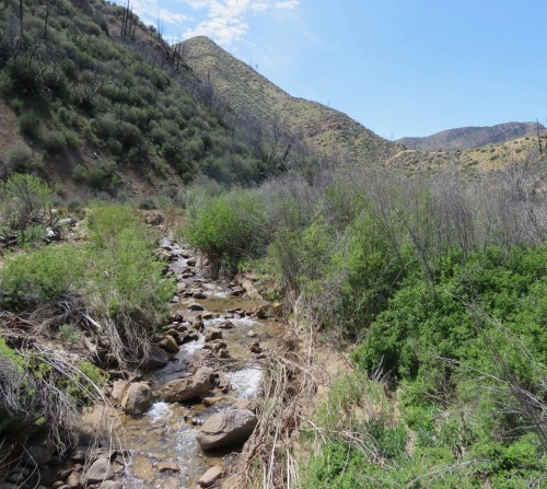 Rancho Nuevo Canyon trail hike dick smith wilderness los padres national forest