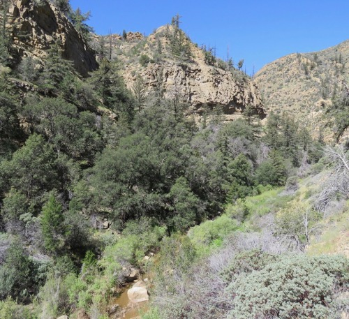 Rancho Nuevo Canyon Trail Dick Smith Wilderness Cuyama Los Padres National Forest backpacking