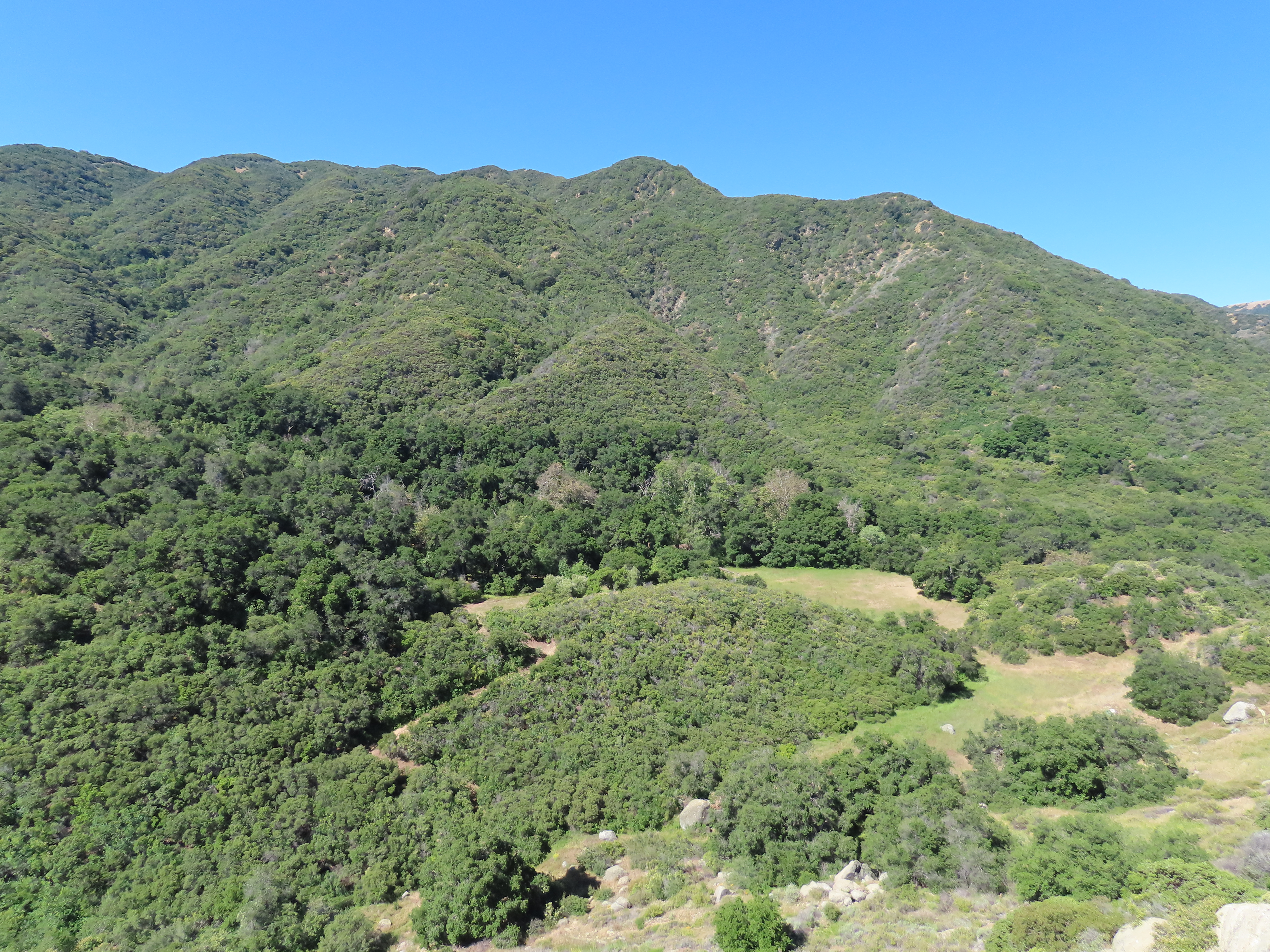 Bear Meadow Forbush Flats Camp Conestoga Frank Van Schaik Wilson Wildcats North Cold Spring Trail hiking backpacking Los Padres National Forest