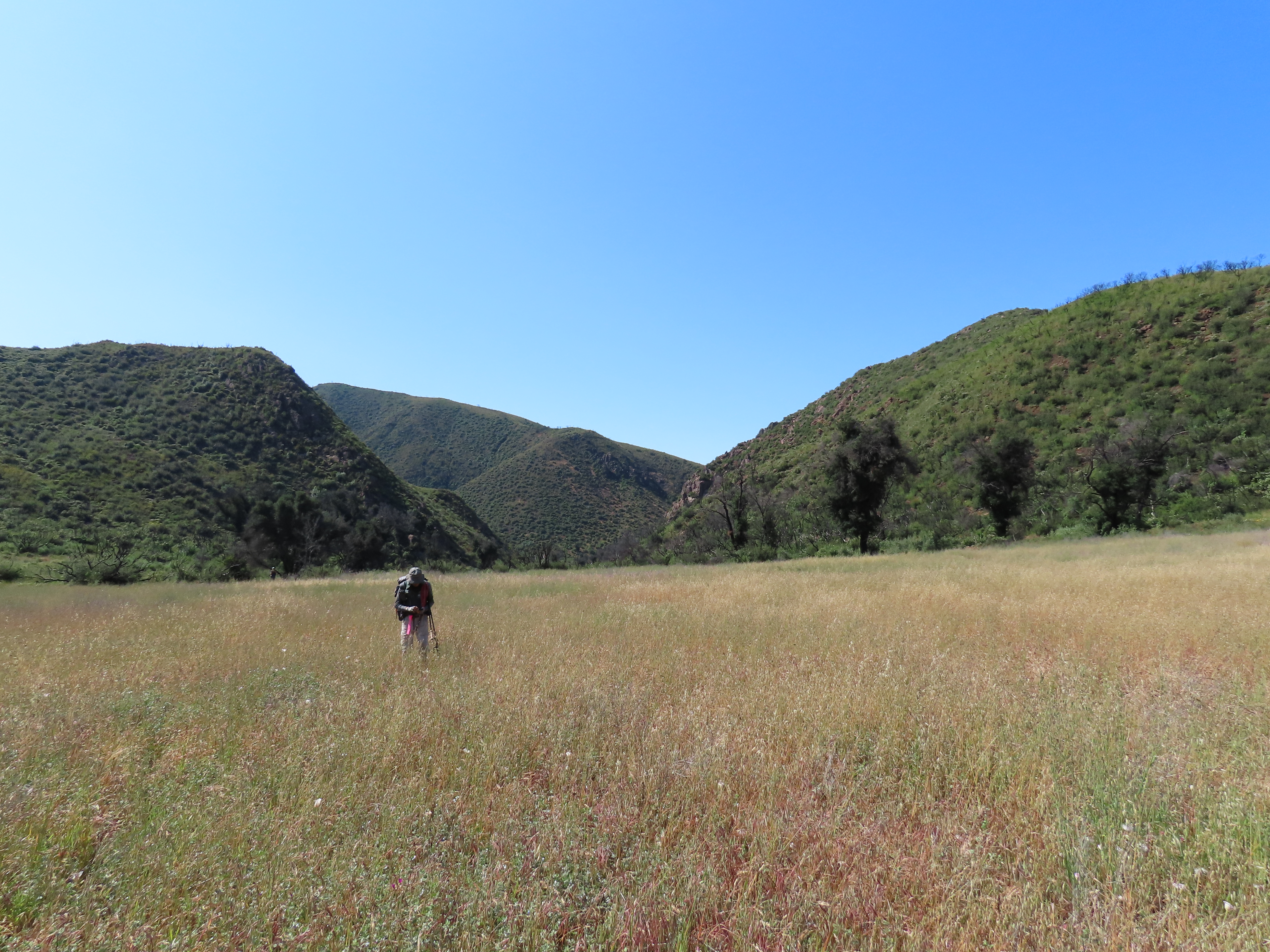 Indian Meadow hiking backpacking Dick Smith Wilderness Los Padres Natioanl Forest