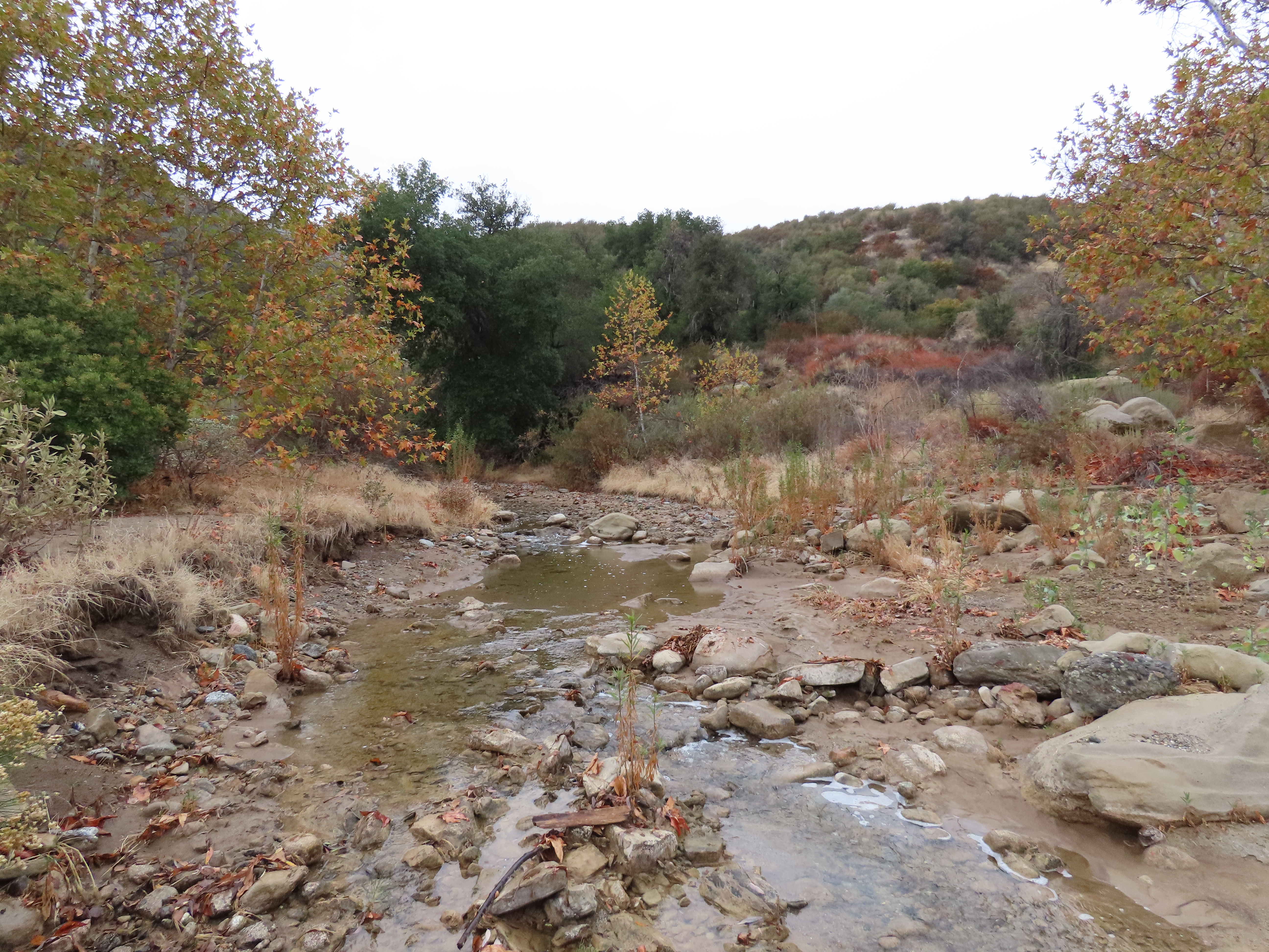 Agua Blanca Creek Trail Sespe Wilderness Los Padres National Forest