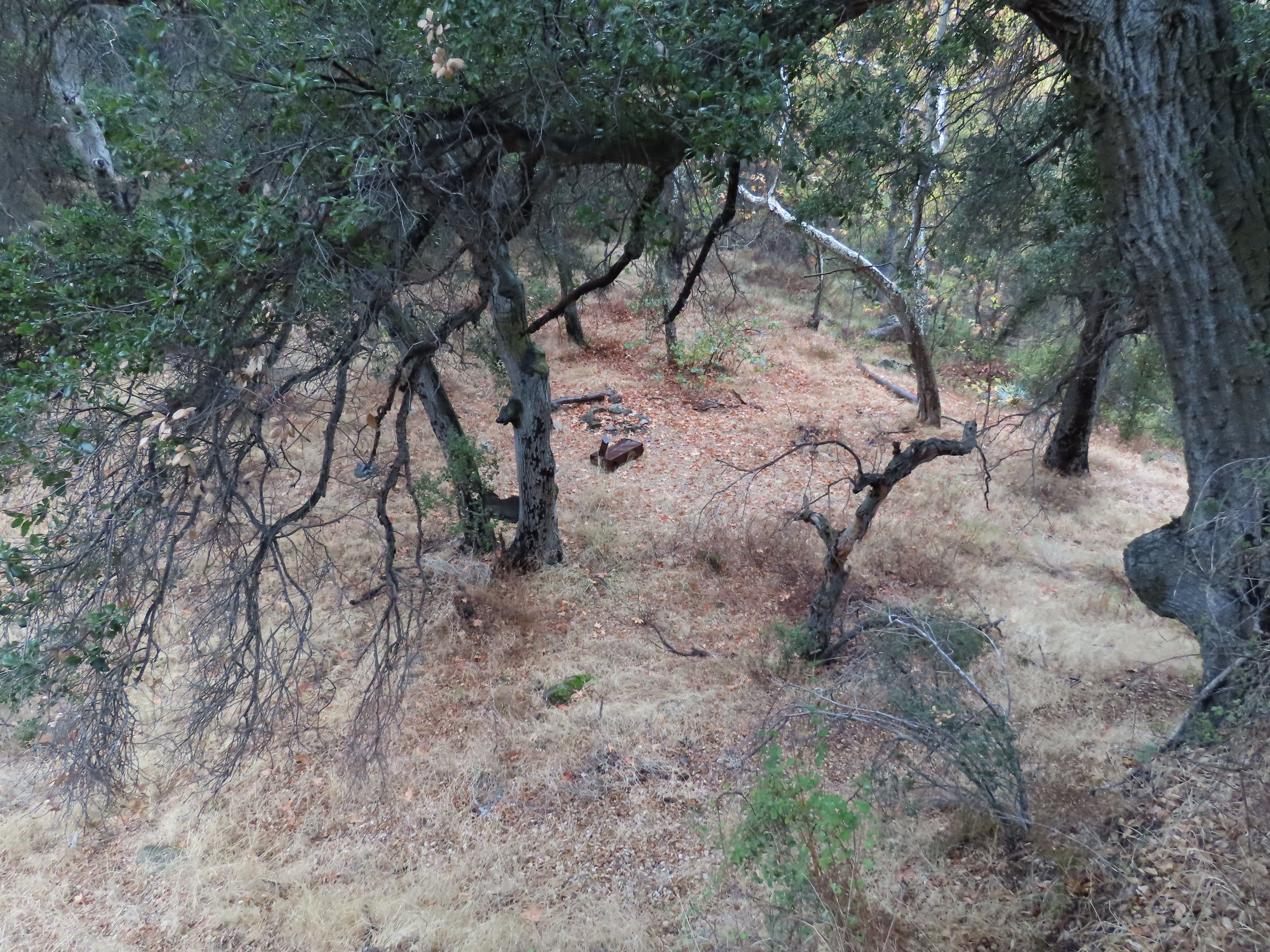 Cove Camp Agua Blanca Trail creek sespe wilderness ice can stove los padres national forest